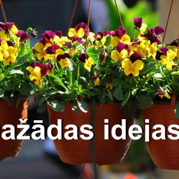 Dažādas idejas