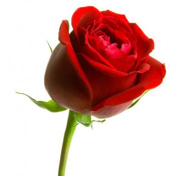 Rīgas Ziedi