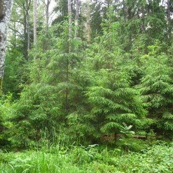 Pārgaujas meži